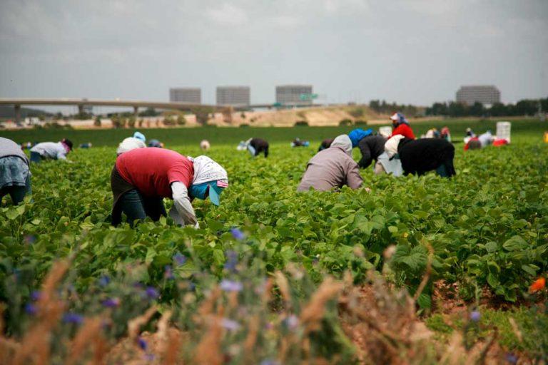 sanatoria-lavoro-immigrazione